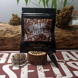 Gift : 1 seed of Notre-Dame - Graines de cannabis régulières - Distribution