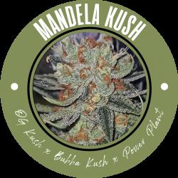 Mandela Kush - Regulären Cannabissamen - Legacy Line