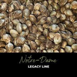 Notre Dame - Semillas de marihuana regulares - Legacy Line