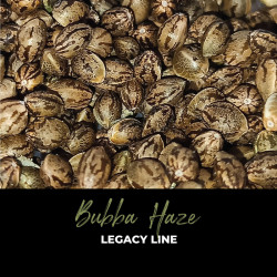 Bubba Haze - Regular Cannabis Seeds - Legacy Line