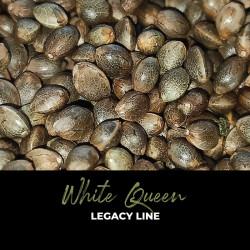 White Queen - Graines de cannabis régulières - Legacy Line