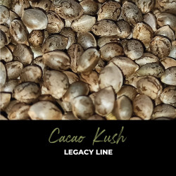 Cacao Kush - Regular Cannabis Seeds - Legacy Line