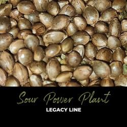 Sour Power Plant - Graines de cannabis régulières - Legacy Line