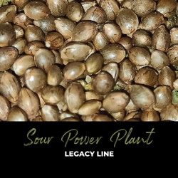 Sour Power Plant - Semillas de marihuana regulares - Legacy Line