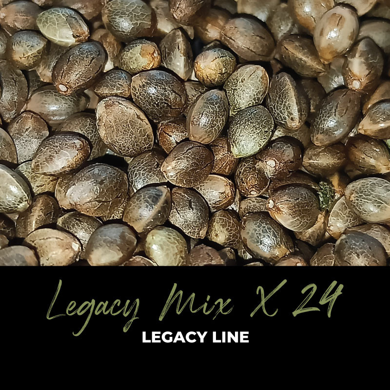 Legacy Mix x24 - Semi di cannabis regolari - Mix
