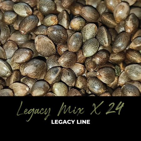 Legacy Mix x24 - Regular Cannabis Seeds - Mix