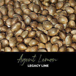 Agent Lemon - Semillas de marihuana regulares - Legacy Line