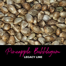 Pineapple Bubblegum - Regular Cannabis Seeds - Bubble Line