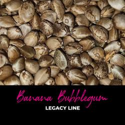 Banana Bubblegum - Regular Cannabis Seeds - Bubble Line