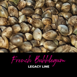 French Bubblegum - Regular Cannabis Seeds - Bubble Line