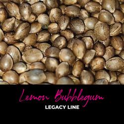 Lemon Bubblegum - Graines de cannabis régulières - Bubble Line