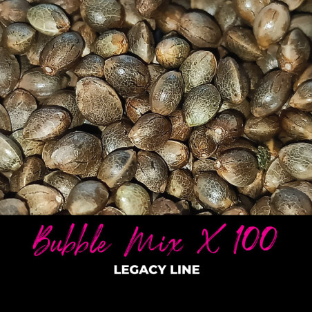 Bubble Mix x100 - Semi di cannabis regolari - Mix