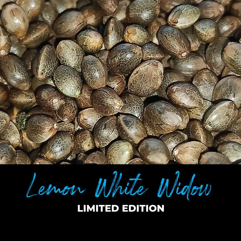 Lemon White Widow - Graines de cannabis régulières - Limited Edition
