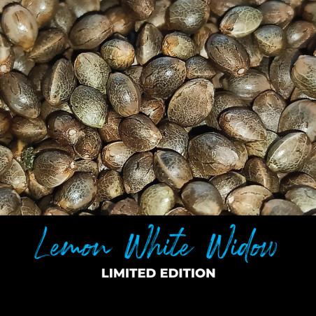 Lemon White Widow - Regulären Cannabissamen - Limited Edition