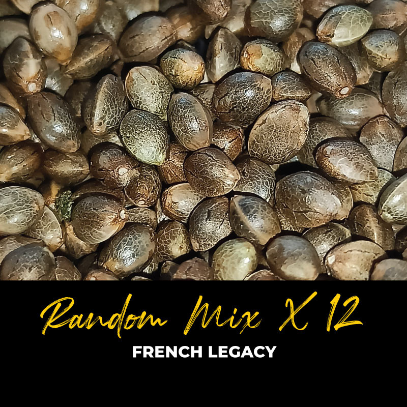 Random Mix x12 - Graines de cannabis régulières - Mix
