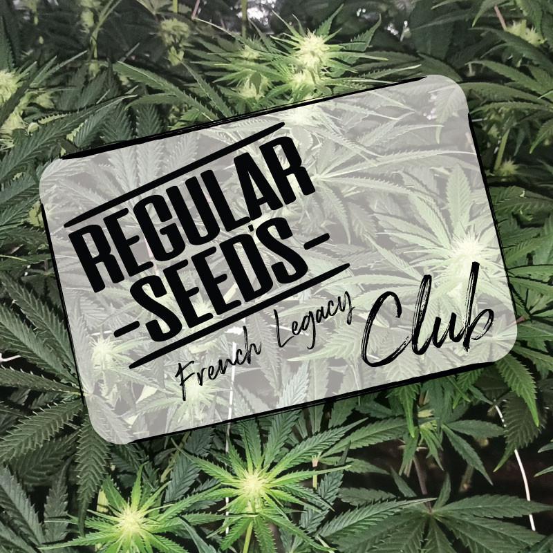 S'abonner au club - Graines de cannabis régulières - Club