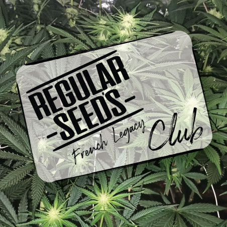 Iscriviti al club - Semi di cannabis regolari - Club