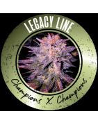 Legacy line Regulären Cannabissamen - REGULAR SEED'S