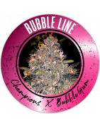 Bubble Line semi di cannabis regolari - REGULAR SEED'S