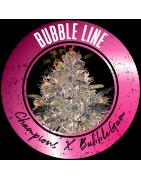Bubble Line graines de cannabis régulières - REGULAR SEED'S