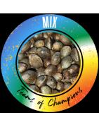 Mix Regulären Cannabissamen - REGULAR SEED'S