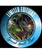 Limited edition graines de cannabis régulières - REGULAR SEED'S